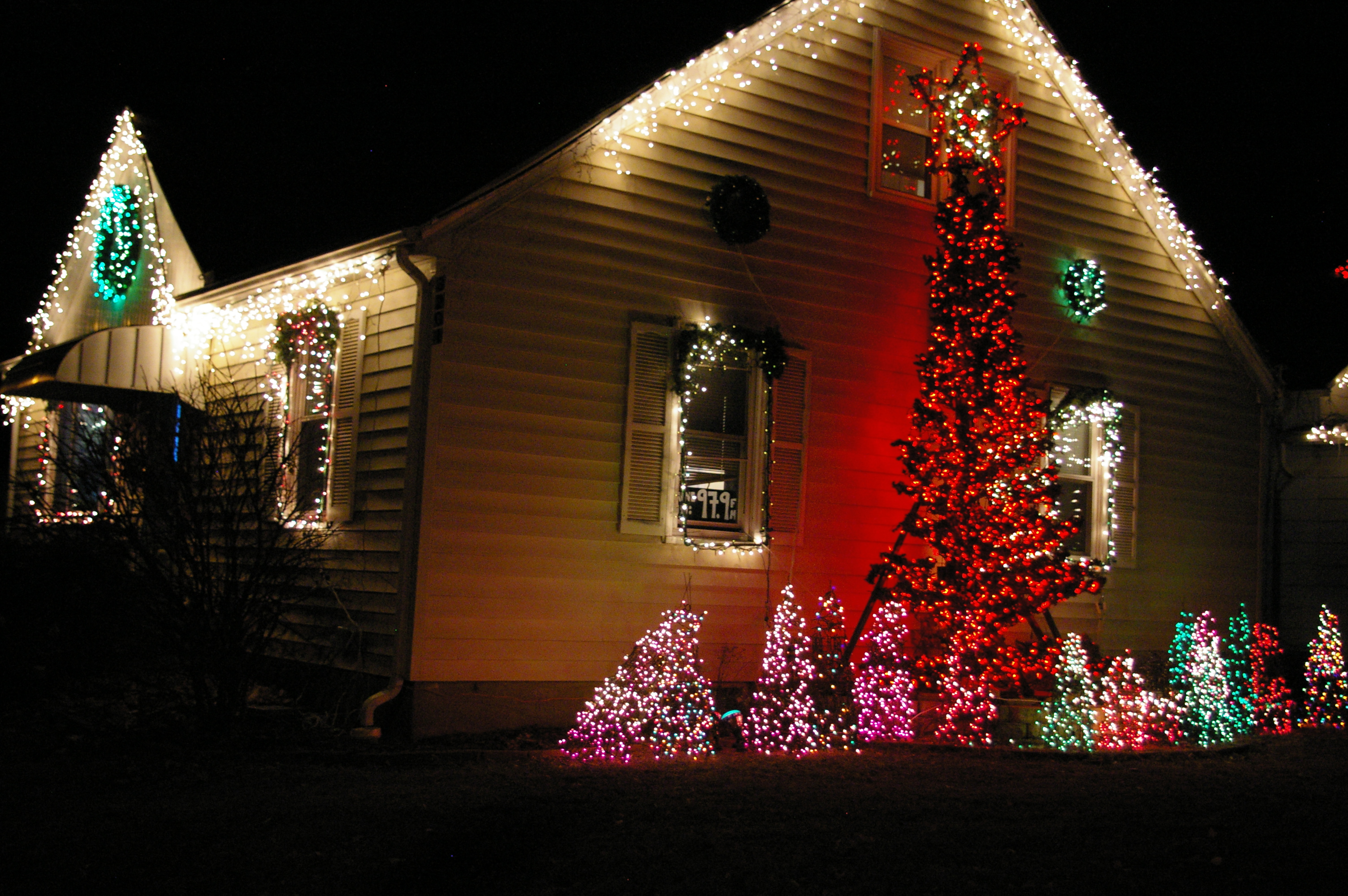 Christmas Lights | Housing a Forest