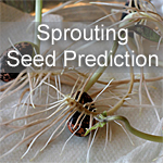 Sprouting Seed Activity