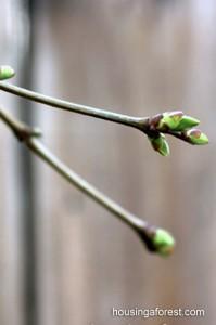 Spring Photo Hunt