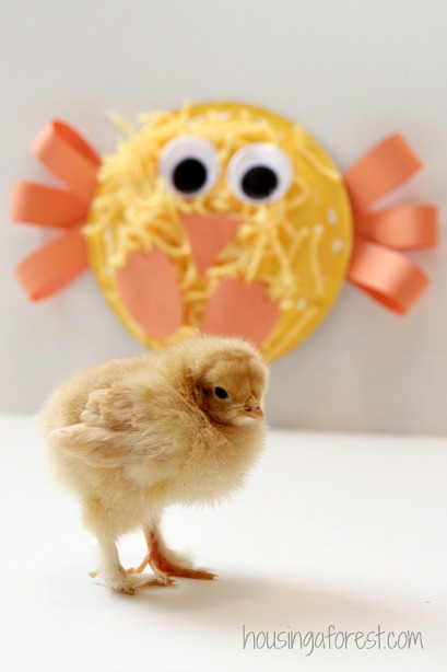 Easter Chick Craft ~ Yarn Paper Plate Chick & Yarn Paper Plate Chick | Housing a Forest